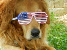 Which pets can or can't be taken back stateside