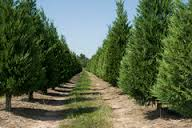Christmas Tree Farms: Find a fresh tree in Germany