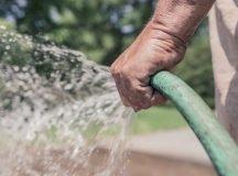 Water-smart landscape, plants tips