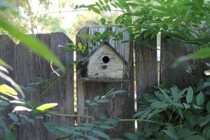 Going Green: Feed birds the right way