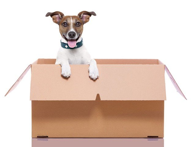 dog in a box pcs with pets