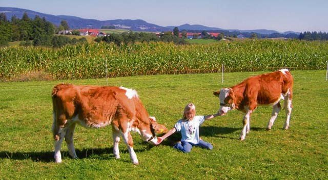Farm holidays at a Bauernhof in Germany and across Europe
