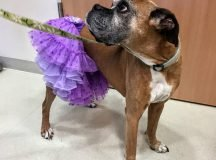 Pups wear their best costumes for Domestic Violence Awareness